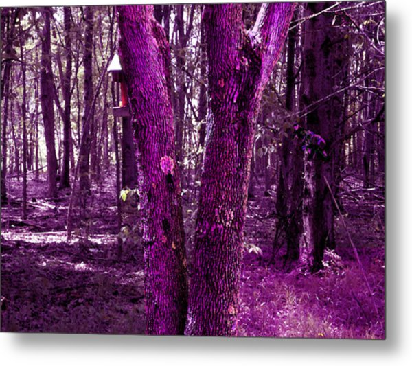 Metal Print featuring the photograph Serene In Purple by Michelle Audas