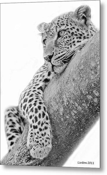 Serengeti Leopard Metal Print