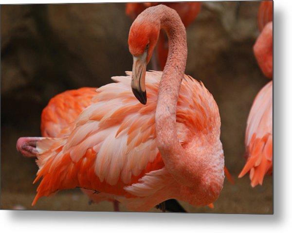 Serious Flamingo Metal Print by Teresa Blanton
