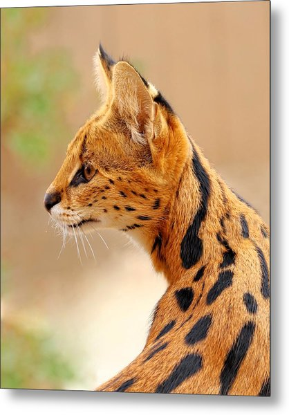 Serval - Extreme Hunter Metal Print