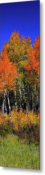 Metal Print featuring the photograph Set 54 - Image 3 Of 5 - 10 Inch W by Shane Bechler