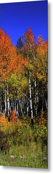 Metal Print featuring the photograph Set 54 - Image 4 Of 5 - 10 Inch W by Shane Bechler