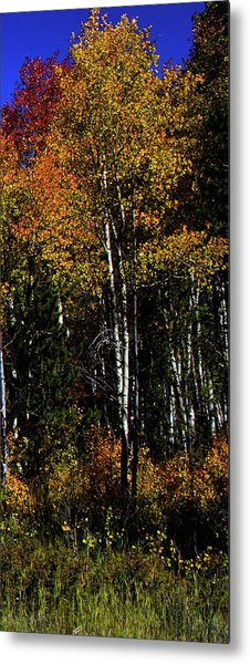 Metal Print featuring the photograph Set 54 - Image 5 Of 5 - 10 Inch W by Shane Bechler