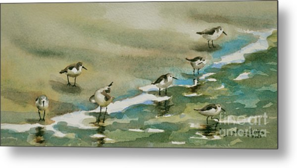 Seven Sandpipers At The Seashore  Metal Print