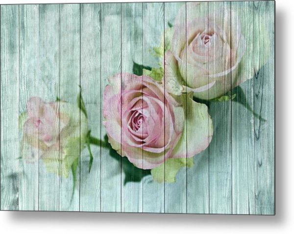 Shabby Chic Pink Roses On Blue Wood Metal Print