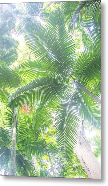Shade Of Eden  Metal Print