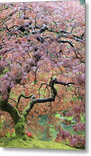 Metal Print featuring the photograph Shaded By Beauty by Brandy Little