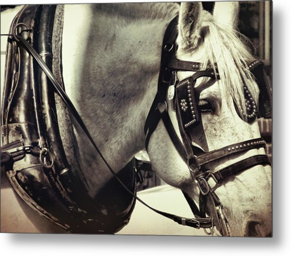 Shades Of Gray Metal Print by Dressage Design