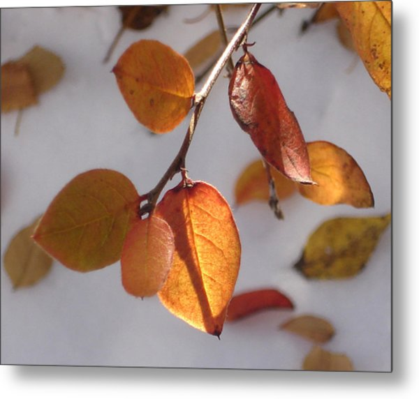 Shades Of Red And Yellow Metal Print by Marilynne Bull