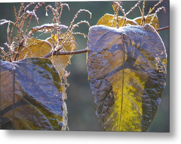 Shadows Metal Print by JAMART Photography
