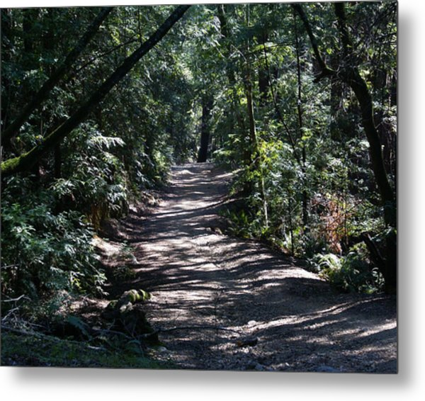 Shady Road On Mt Tamalpais Metal Print