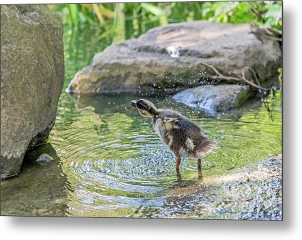 Metal Print featuring the photograph Shake It Off by Kate Brown
