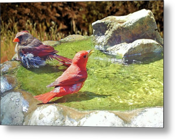 Sharing A Bath Metal Print