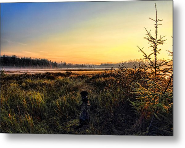 Sharing A September Sunrise With A Retriever Metal Print