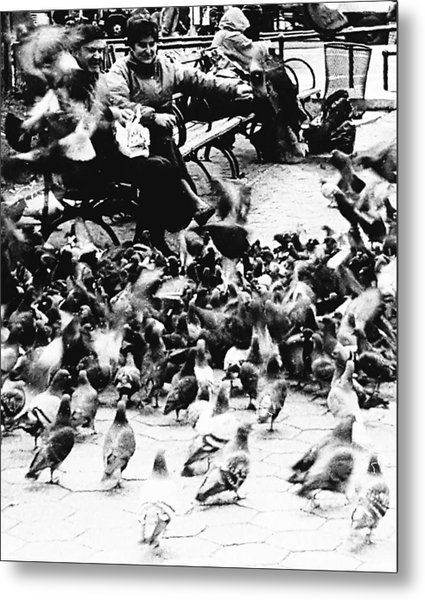 Sharing With The Pigeons  Metal Print by Elizabeth La Caille