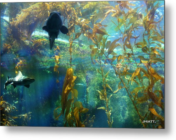 Shark Bait Metal Print