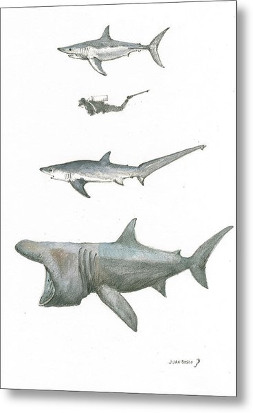 Sharks In The Deep Ocean Metal Print