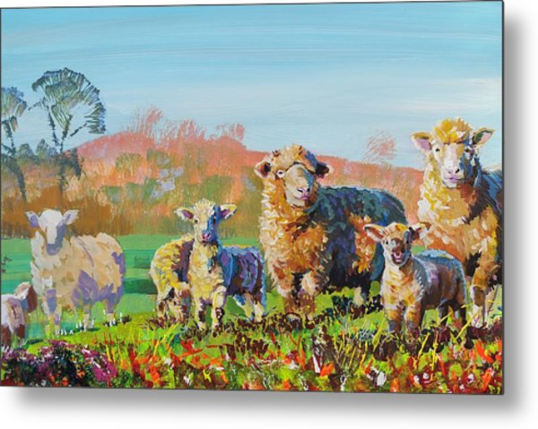 Sheep And Lambs In Devon Landscape Bright Colors Metal Print
