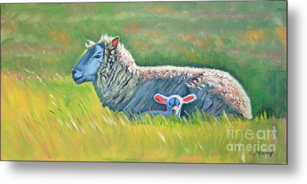 Sheep At Red Hill Farms Metal Print by Colleen Proppe