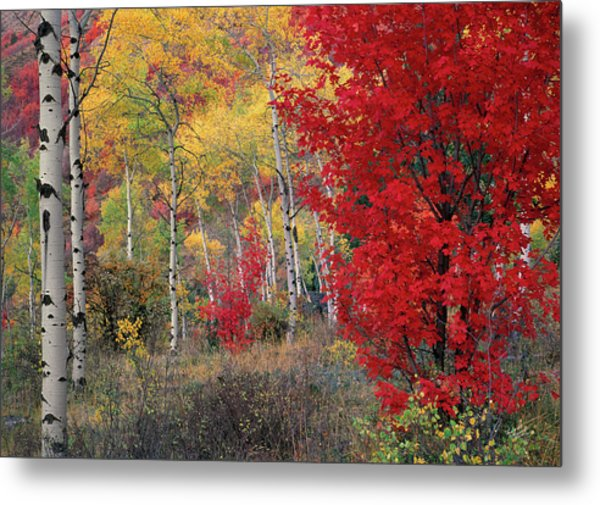 Sheep Canyon In Autumn Metal Print by Leland D Howard