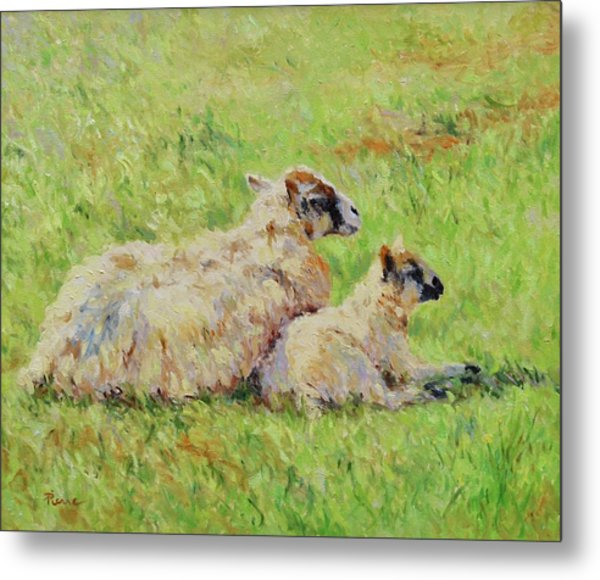 Sheep In The Spring Time,la Vie Est Belle Metal Print