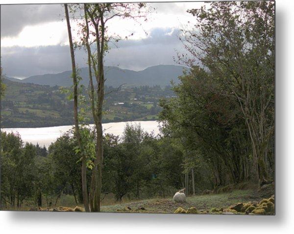Sheep Near Lough Eske Metal Print