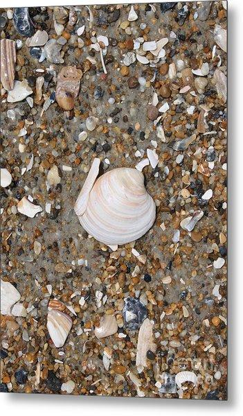 Shell 1 Metal Print by Marcie Daniels