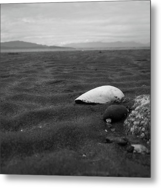 Shell And Sand Metal Print