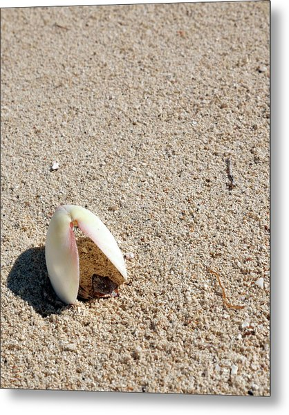 Shell In Sand Metal Print