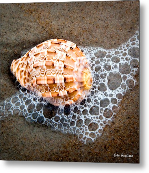 Shell Series No. 4 Metal Print