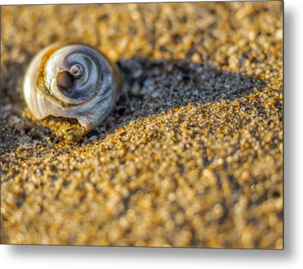 Shell Metal Print by Steve Spiliotopoulos