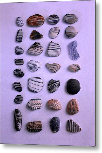Sea Shell Treasures #1 Metal Print