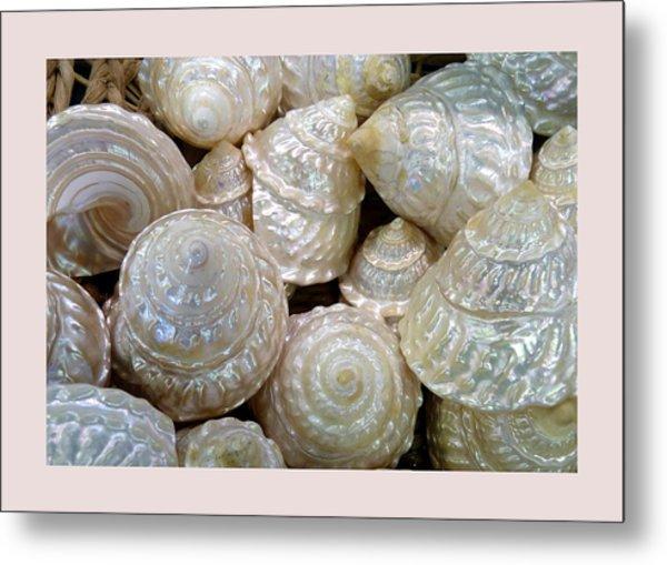 Shells - 4 Metal Print