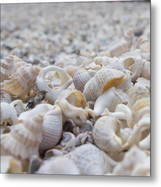 Shells 3 Metal Print