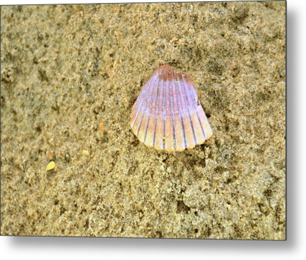 Shells And Stones Metal Print by JAMART Photography