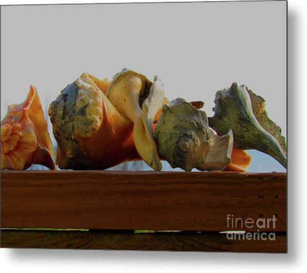 Shells Of The Sea In Orange And Gray Metal Print