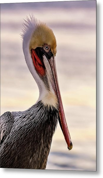 Shelter Island's Pelican Metal Print