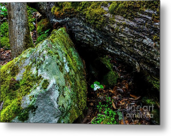 Sheltered By The Rock Metal Print