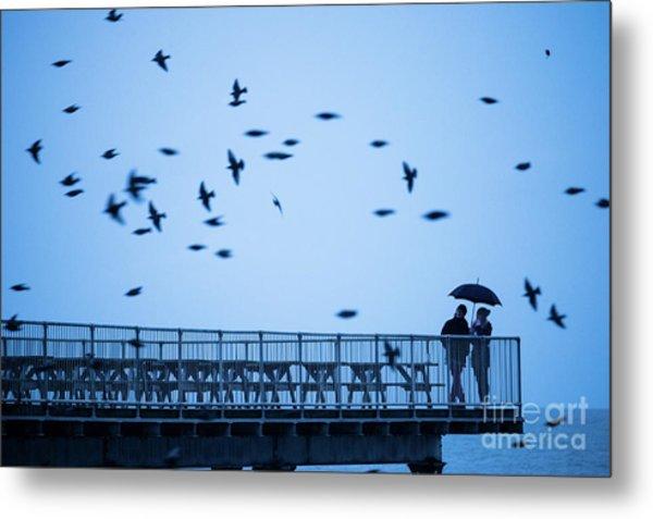 Sheltering Under An Umbrella Watching The Birds Metal Print