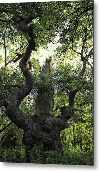 Sherwood Forest Metal Print