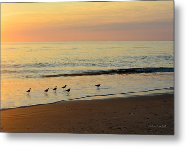 Shorebirds 9/4/17 Metal Print