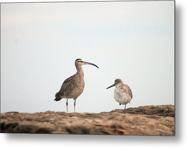 Shorebirds Of Windansea Beach Metal Print