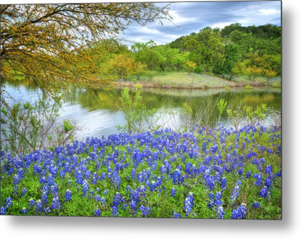 Shoreline Bluebonnets At Lake Travis Metal Print
