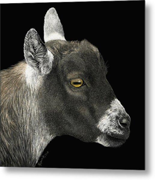 Show Goat Metal Print