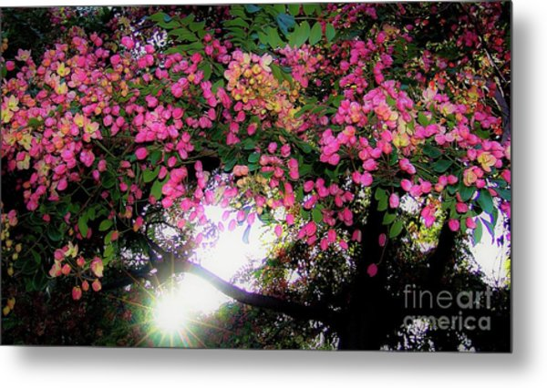 Shower Tree Flowers And Hawaii Sunset Metal Print