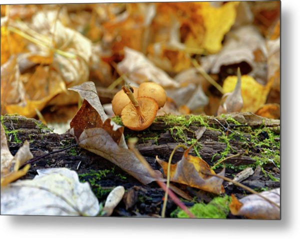 'shrooms Metal Print