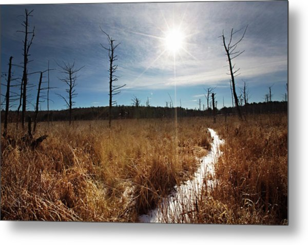 Metal Print featuring the photograph Shrub Swamp by Sue Collura