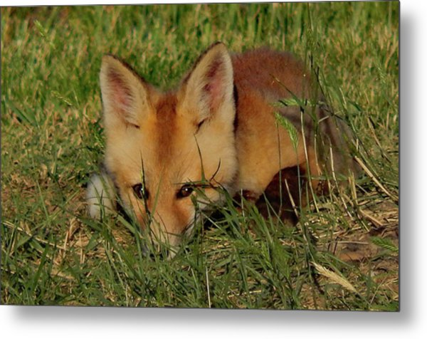 Shy One Metal Print