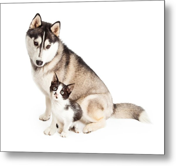 Siberian Husky Dog Sitting With Little Kitten Metal Print