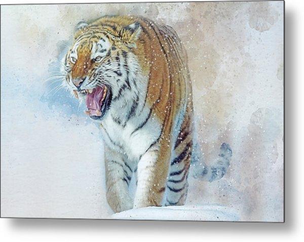 Siberian Tiger In Snow Metal Print